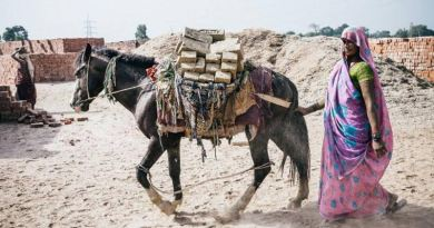 A brick kiln horse at work in India.