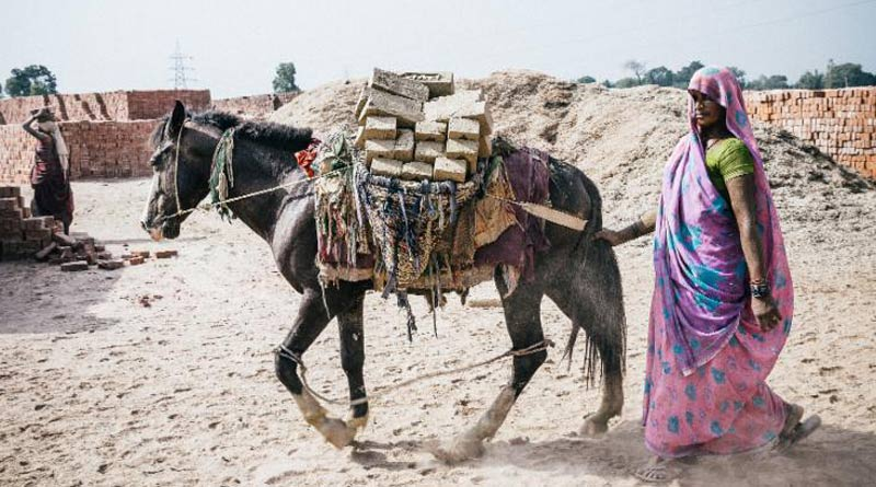 A brick kiln horse at work in India.