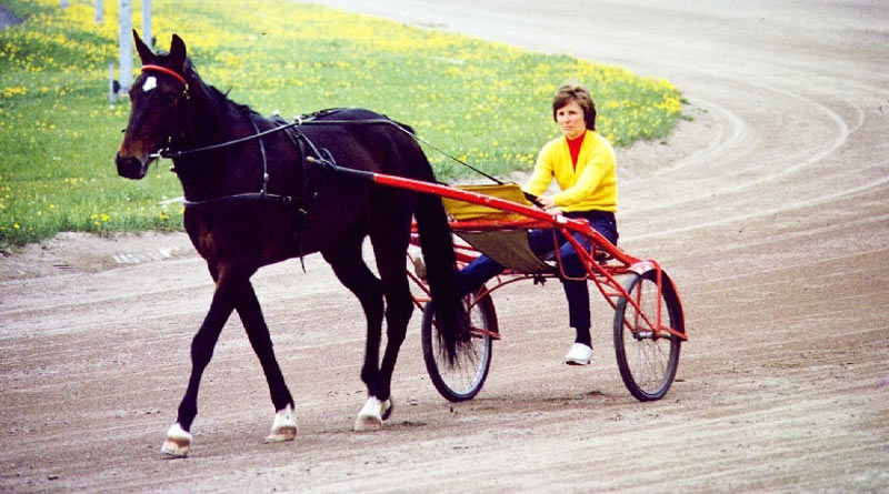 Standardbreds in New Zealand will have a January 1 birthday from now on, instead of August 1.