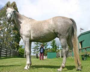 A good and regularly updated photographic record of your horses is essential.