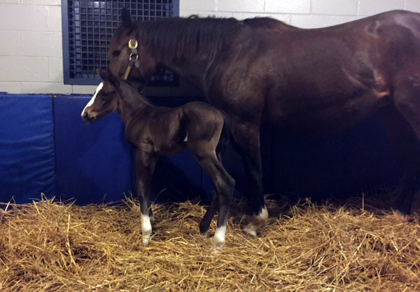 Kakadu with her American Pharoah colt.