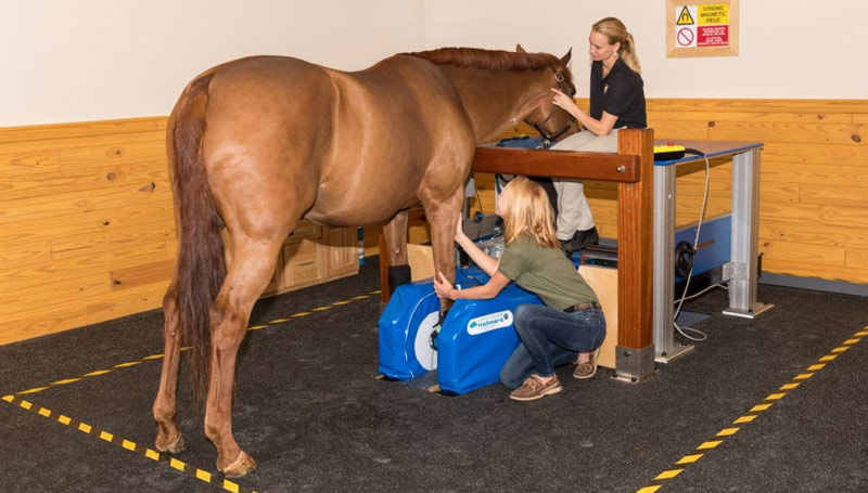 The Equine Standing MRI produces highly detailed images in several different planes to capture a complete image of a desired area.