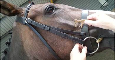 Callipers were used to measure the distance between the rostral margin of the facial crest and caudal margin of the noseband.