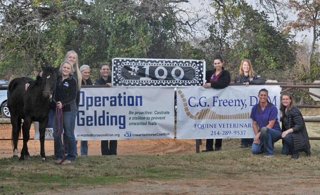 Crashwas the 100th colt to be gelded in clinics run by Kaye Garrison and Lacey Edge for theUnwanted Horse Coalition's Operation Gelding Program.