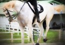 On the move: Horses can't defy the laws of physics
