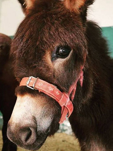 "Donkey foal Massun, who was found abandoned in Jordan, has been voted by the public as the cutest Spana animal of 2016. ""All animals are beautiful to us, but we think Massun's gorgeous eyes clinched it for her,"" the charity said."