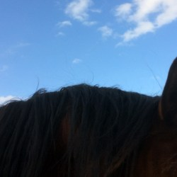 """Home Direct"" scheme for rehomed horses proves popular"
