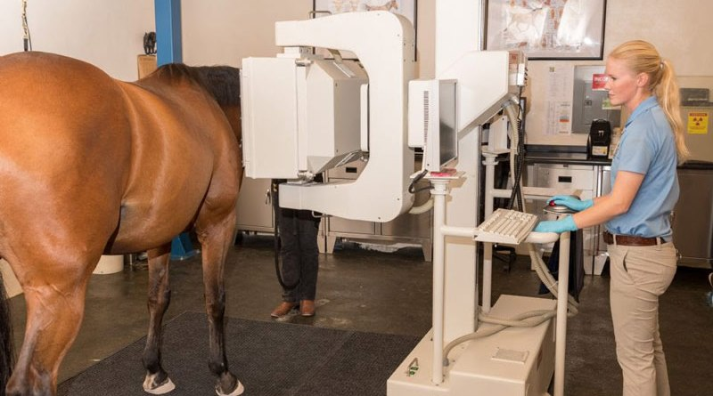 Horse world catches up with high-tech health care