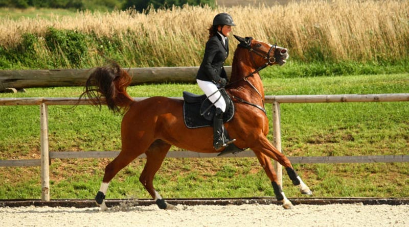 Too much horse? Or a horse in pain due to an ill-fitting saddle? © Shutterstock