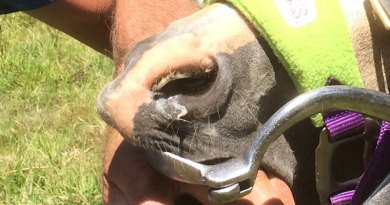 Helping your horse cope with Equine Herpes Virus (EHV)