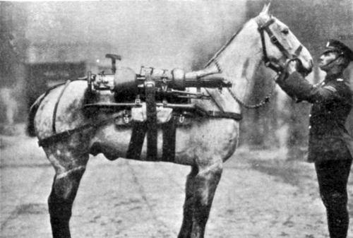 A World War 1 Infantry horse.