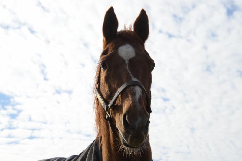 1999 Horse of the Year Charismatic has died at the age of 20.