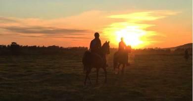 Supplement-mixing error sees UAE endurance horses fail drug test