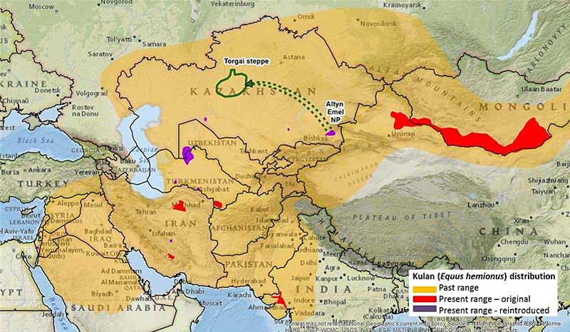 The green circle shows where the kulan have been taken to repopulate the central steppes of Kazakhstan.