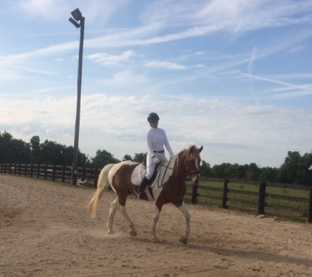 Karin Pekarchik riding her 20-year old draft cross Bruce at his first dressage show, a local schooling event held this past summer.