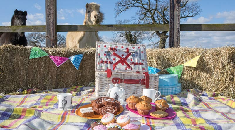 """Pony treats galore! Horse lovers are being urged to take part in """"The Morning Feed"""", with World Horse Welfare."""