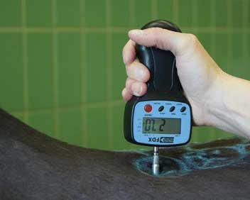 The algometer being used to exert pressure at the level of the 14th thoracic vertebra. Photo: BMC Veterinary Research /DOI: 10.1186/s12917-017-1002-y