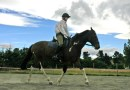 Problems of ill-fitting tack made worse by heavier riders, initial study findings show
