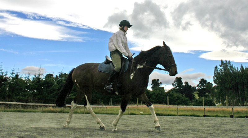 A position paper released by the International Society for Equitation Science challenges the belief that the person handling a horse must be in a dominant position. Photo: Horsetalk