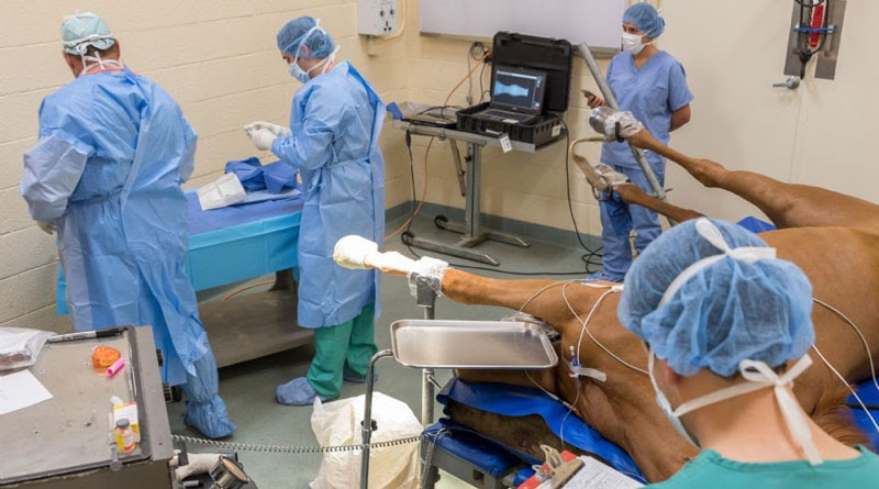 Palm Beach Equine Clinic is one of the leading facilities in the U.S. for quickly diagnosing, treating, and repairing condylar fractures.