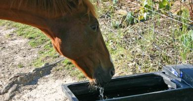 Rehydrating enemas for horses still have their uses, researchers suggest