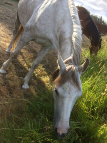 Laminitis, EHV and racehorse injuries at forefront of new equine
