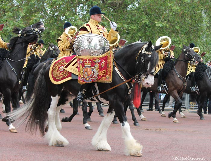 Achilles 'at work' leading the Band of the Household Cavalry Mounted Regiment carrying the priceless drums of the Life Guards.