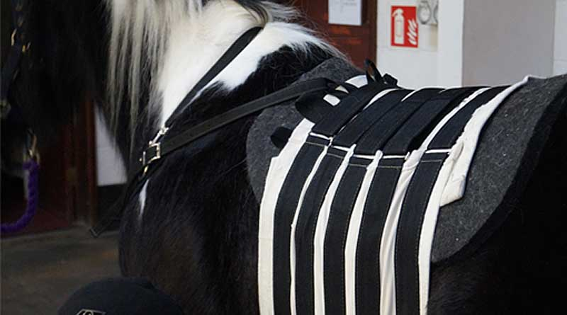 The belt will be used at Redwings to help horses that find themselves with the same problem as Josephine.
