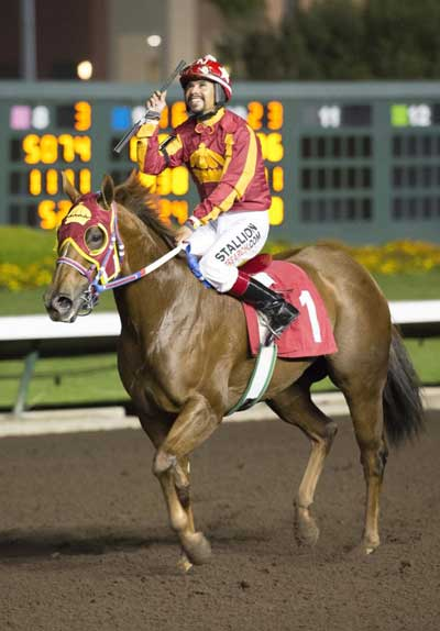 Significant Heart is among the racehorses owned by Princess Abigail Kawananakoa of Hawaii that has undergone surgery with McIlwraith. She was named 2014 National Champion Aged Mare by the American Quarter Horse Association. Photo: Los Alamitos Race Course