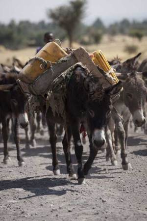 Poor people across Africa rely on donkeys for their livelihood, which is being impacted by Chinese demand for the skins of the animals.
