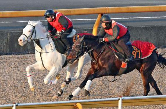 Casta Diva, pictured in a training gallop, has won her first race in Japan.