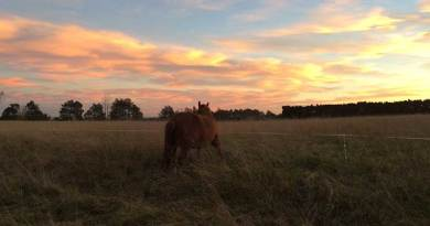 Casting light on the mysteries of liver disease in horses
