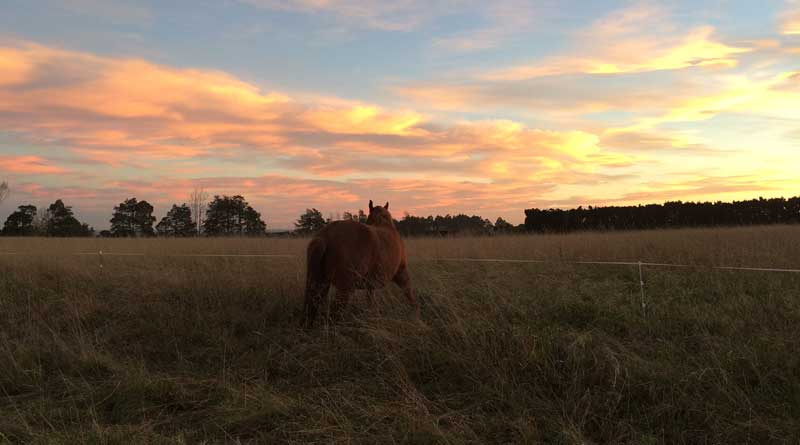 Mood Kussens Sale : Pilot studies to explore elements of equine metabolic syndrome