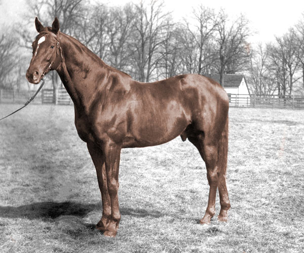 """Does your horse look like Man o' War? A contest is under way top find a double of """"the mostest horse that ever was""""."""