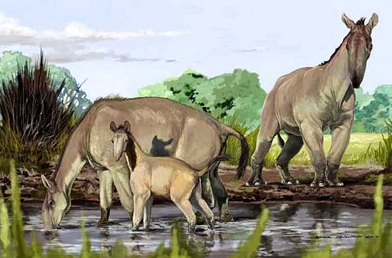 An artist's reconstruction of a family of the extinct South American native ungulate Macrauchenia patachonica. Image: © Jorge Blanco