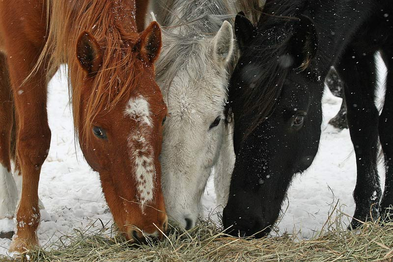 Wild horses at an ecosanctuary in Wyoming.