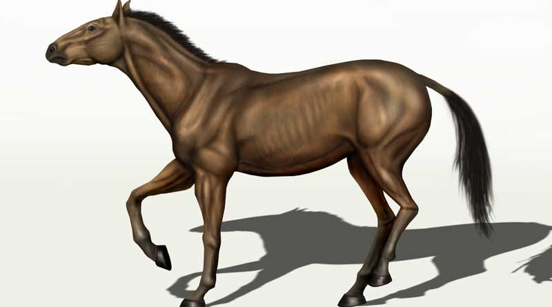 The findings of the study suggest Equus conversidens ranged widely through the North American western interior. Image: Karkemish assumed (based on copyright claims). CC BY 3.0 via Wikimedia Commons