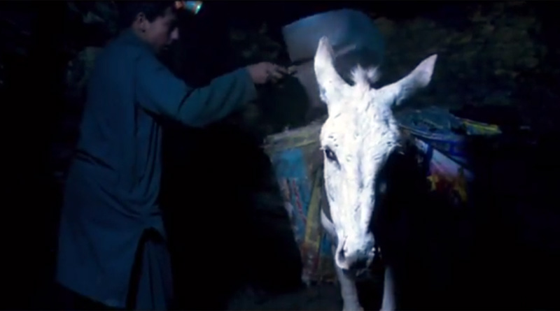 More than 100,000 donkeys work in coal mines in Pakistan.