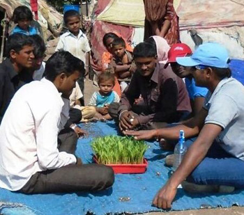 Villagers in Maharashtra learn about hydroponics.