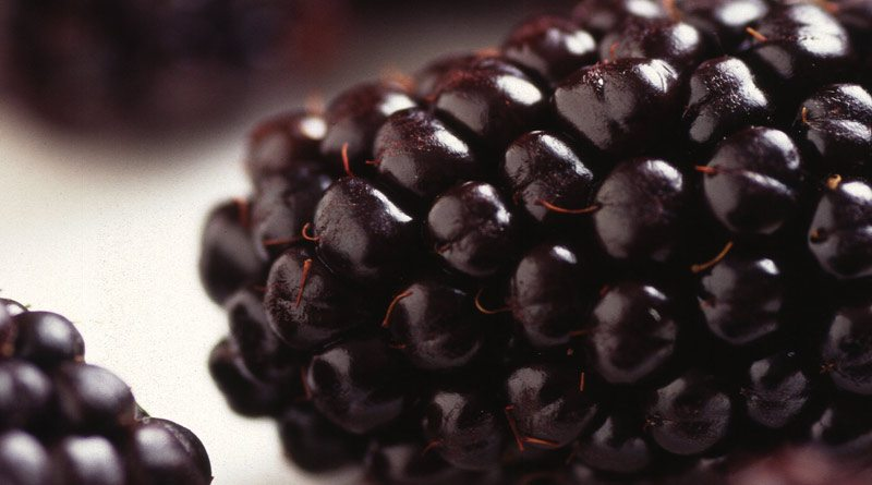 Black Butte blackberry