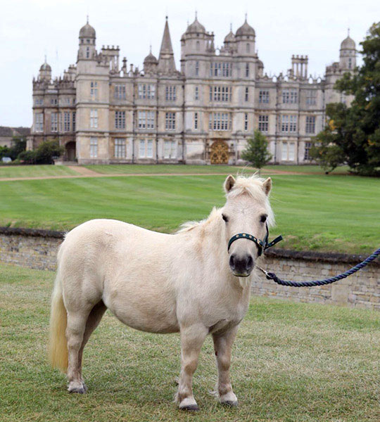 Pamela is taking her place at the Burghley Horse Trials this weekend.