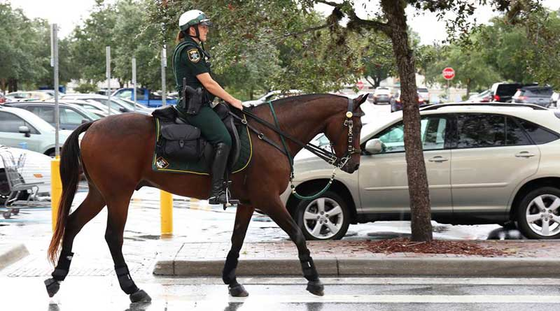 SSO Valor has worked with distinction as a police horse in Florida for 14 years.
