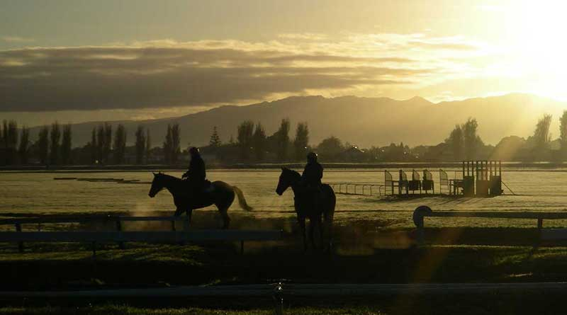The reason for the lower rate of injuries among New Zealand's flat-racing thoroughbreds, when compared to other countries, has yet to be fully explained. Photo: Massey University