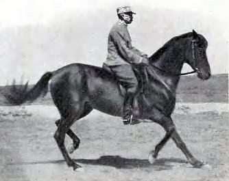 Étienne Beudant trotting backwards on Robertsart II.