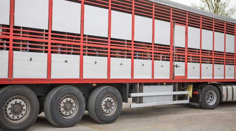 Horses are transported in trucks for thousands of miles across Europe to reach slaughter plants. Photo: World Horse Welfare