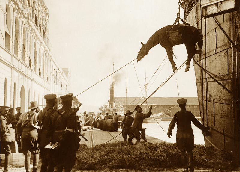103 years ago this month, America's horses and mules began their one-way journey to the battlefields of World War One.