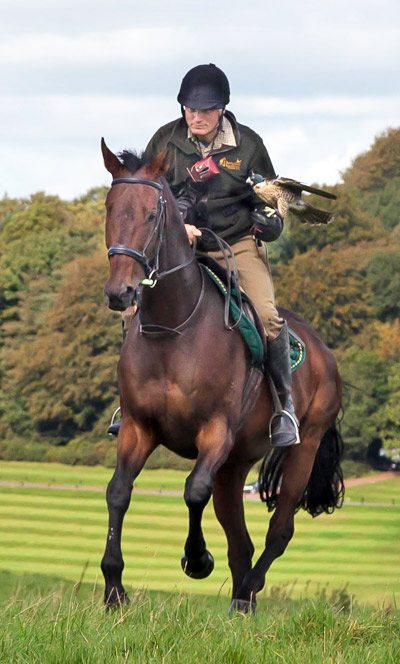 Caymans is the latest OTTB racehorse Martin Whitley has trained for falconry.