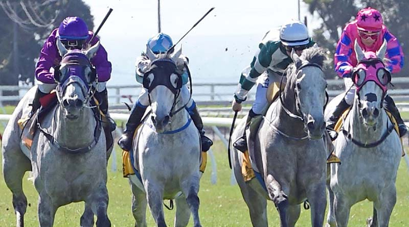 It was a day for the greys as Yin Dragon (purple colours) edged out Our King Sway (white cap) in the day's closest finish, in the Powerworx Greys race at New Plymouth.