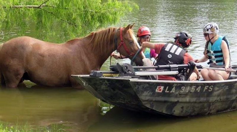 A horse being rescued from floodwaters following Hurricane Harvey, which struck Texas last month.
