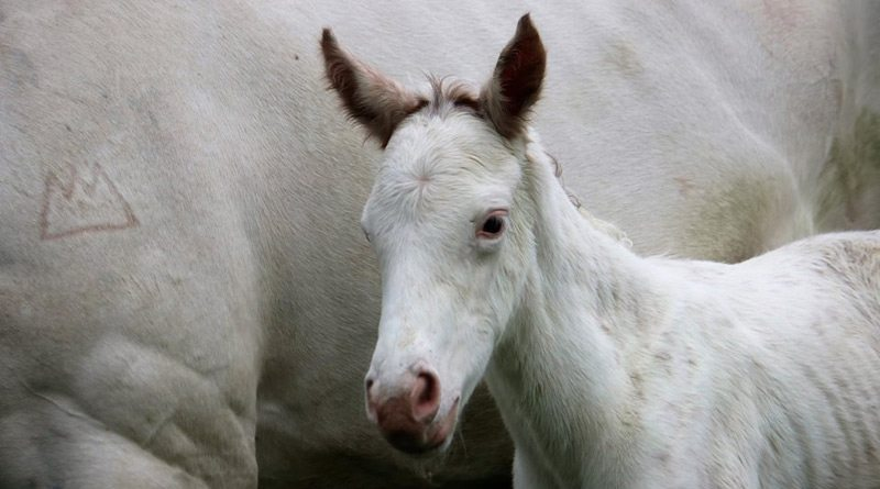 The filly by Mongolian Khan from The Opera House was born at Windsor Park Stud on October 24.